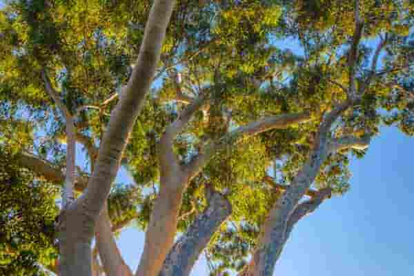 Gum Tree Removal Melbourne_Treelife