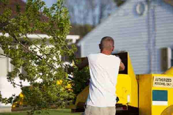 Tree Removal_services
