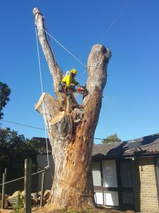 Tree and Stump Removal Experts Melbourne