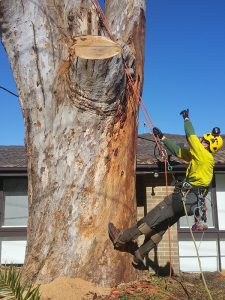 Tree and Stump Removal Experts