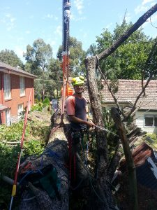 Tree Stump Removal Experts