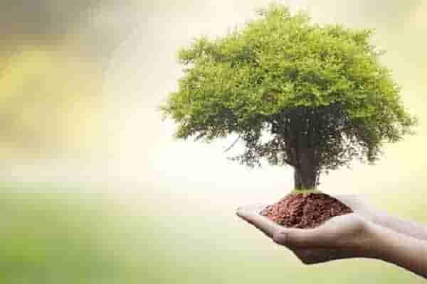 Tree Care_treelife