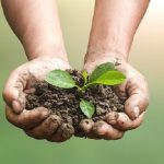 Mulch For Sale_soil-management