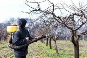 tree disease pest control
