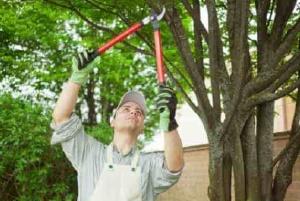 tree-pruning-min