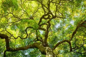 Tree Canopy Spraying