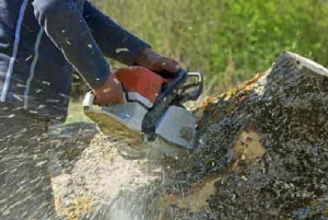 Mulch For Sale_stump-removal