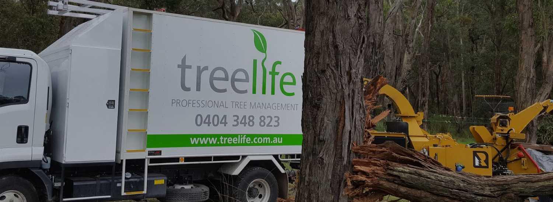 Treelife Professional tree management